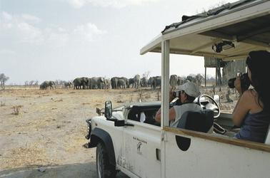 Elefantenbeobachung vom Safari-Fahrzeug aus
