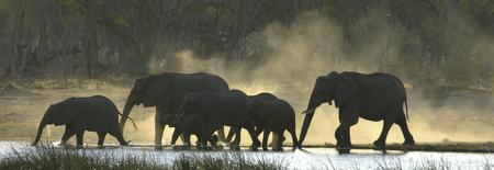 Elefanten im Chobe Nationalpark © Lernidee