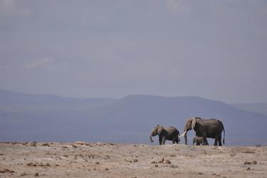 Elefanten im Amboseli Nationalpark © Kenya-Experience, ©Kenya-Experience