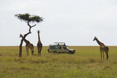 Safari-Fahrzeug und Giraffen in Kenia ©Kenya Experience, ©Kenya-Experience