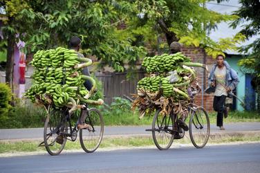 Tansania, Bananentransport ©Tanzania Experience, ©Tanzania Experience