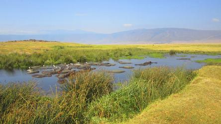 Tansania, Ngorongoro-Krater, Hippo-Pool ©Tanzania Experience, ©Tanzania Experience