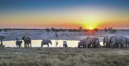 Elefanten am Wasserloch © Batrox Adobe Stock