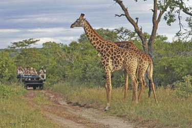Auf Tuchfühlung mit Giraffen © Volker Haak - Fotolia