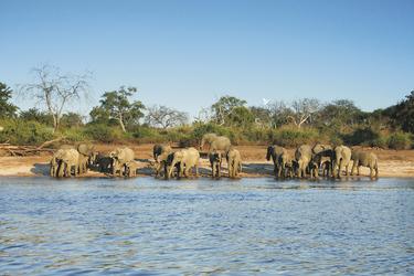 Elefantenherde im Choba Nationalpark © fotolia