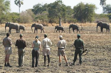 Fußpirsch South Luangwa Nationalpark, ©Robin Pope Safaris