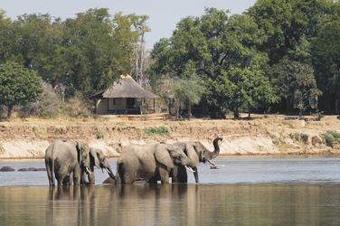Elefanten am Nsefu Camp, ©Robin Pope Safaris