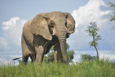 ©Mukambi Safaris