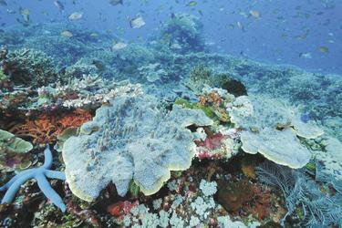 Unterwasserwelt in Komodo