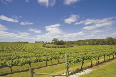Weingut in Margaret River, ©shutterstock