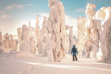 ©LauraVilne - shutterstock.com