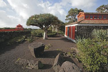 Pico, Museu de Vinho, ©Melo Travel