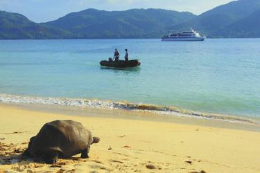 Schildkröte am Strand mit MY PEGASUS im Hintergrund - copyright Variety Cruises, ©Variety Cruises