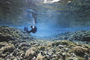 Taucher auf den Seychellen - copyright Variety Cruises