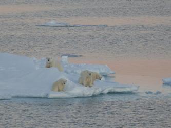Eisbären auf einer Eisscholle - c Guest image Ina Schau Johansen