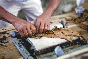 Zigarrendreher bei der Herstellung - plantours Kreuzfahrten, ©Man processing the tobacco leaves and making cigarsnStockfoto ID_nBildnummer._ 87399821nFreigabeinformation_ Nicht zutreffendnUrheberrecht_ Andresr