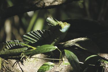 Tierwelt im Tortuguero Nationalpark