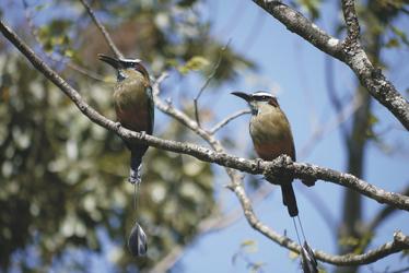 Vögel im Nationalpark Rincon de la Vieja