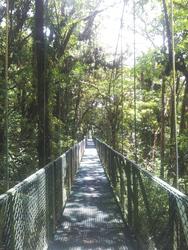 Hängebrücke durch den Nebelwald