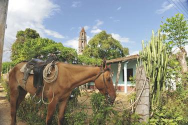 Pferd in Trinidad ©Toni Bauer