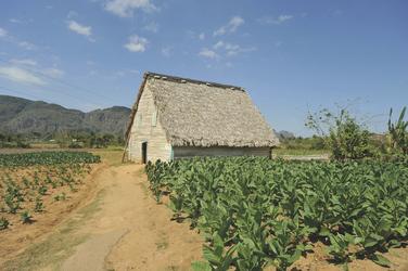 Tabakanbau in Pinar del Rio ©Toni Bauer