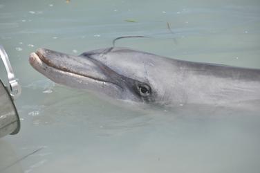 Delphinfütterung in Monkey Mia, ©Karawane