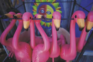 Flamingos - Key West - Foto: Florida Tourism © Quentin Bacon
